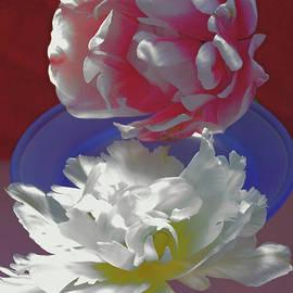 Tulip Fever # 18. by Alexander Vinogradov