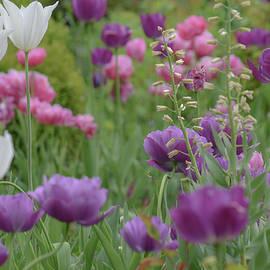 Tulip Fields by Christina McGoran