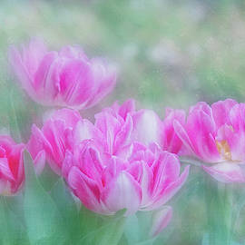 Tulip Garden by Terry Davis