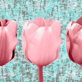 Tulip in Triplicate  by Bentley Davis