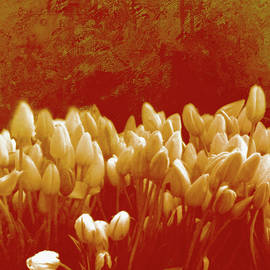 Tulip Storm .. by Judy Foote-Belleci