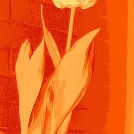 Tulipe en Orange by VIVA Anderson