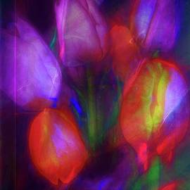 Tulips Abstract by Christina Ford