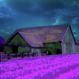 Tulips and barn experiment by Jeff Burgess
