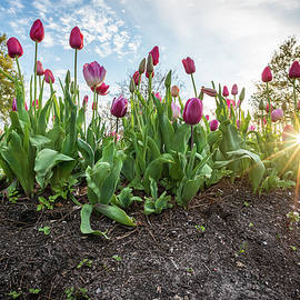 Tulips at City Park by Chase This Light Photography