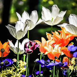Tulips at Keukenhof by Adelina Alexe