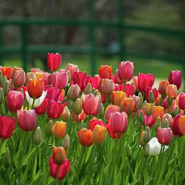 Tulips by the Monet Bridge by Mary Ann Artz