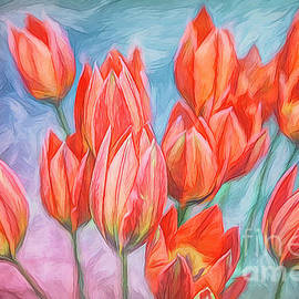 Tulips in my Garden by Jutta Maria Pusl