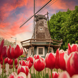 Tulips of Pella Iowa by Ben Ford