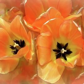 Tulips Together  by Lynda Lehmann