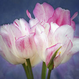 Tulips With Pink Edges by Elvira Peretsman