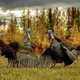 Turkey Duel by Patti Deters