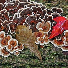 Turkey Tail In Fall by Debbie Oppermann