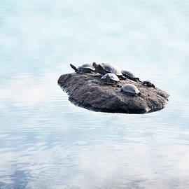 Turtle Island by Yuri Lev