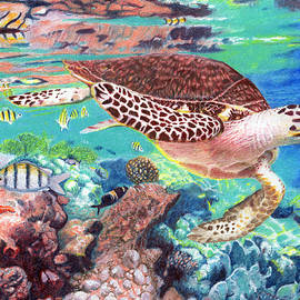 Turtle on the Reef by Todd Hatchett