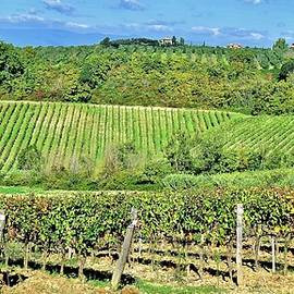 Tuscan Vineyard in Panoramic Form by Frozen in Time Fine Art Photography
