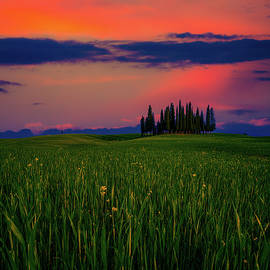 Tuscany Cypress Copse by Chris Lord