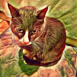 Tuxedo Cat by Genevieve Esson