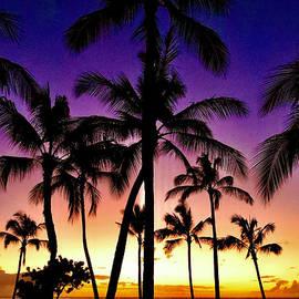Twilight Palms by Craig Wood