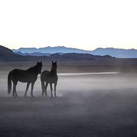 Twilight Stallions by Kent Keller