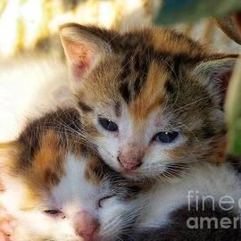 Twin Kittens by Debra Lynch