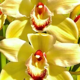 Twin Orchids  by Michael Klahr