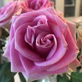 Twin Rose.