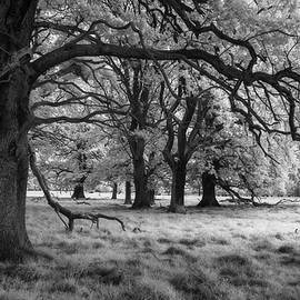 Twisted forest infrared by Murray Rudd