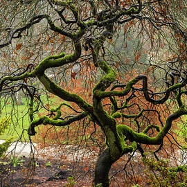 Twisted Tree by Angie C