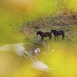 Two beautiful horses 2 by Cosmin Stan