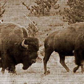 Two Bison Walking at Yellowstone National Park by Lyuba Filatova