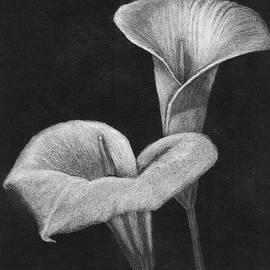 Two Calla Lilies by Katrina Gunn