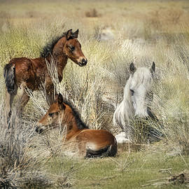 Two Foals And A Mare by Jerry Cowart