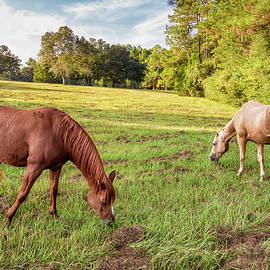 Two Horses by Bill Chambers