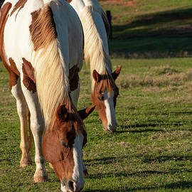 Two Horses Grazing by Karen Rispin