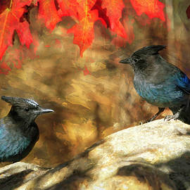 Two Jays on a Rock by Donna Kennedy