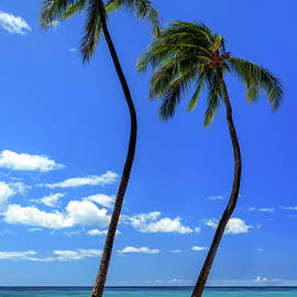 Two Palms In Hawaii by James Eddy