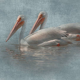 Two Pelicans - Texture Blend by Greg Thiemeyer