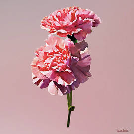 Two Pink Carnations by Susan Savad
