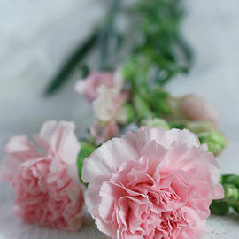 Two Pink Carnations by Taphath Foose