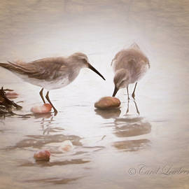 Two Sandipers eploring shells on the beach by Carol Lowbeer