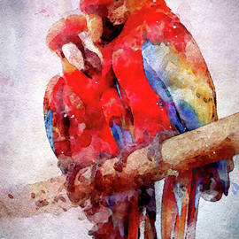 Two Scarlet Macaws in Watercolor by Susan Maxwell Schmidt