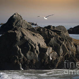 Two Seagulls And Sea Stack At Brookings Harbor by Michele Hancock Photography