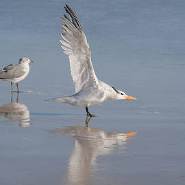 Two seagulls with their reflections by Zina Stromberg