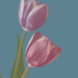 Two Soft Pink Tulips  by Johanna Hurmerinta