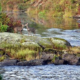Two Deer_Vermillion River by Rick Hansen