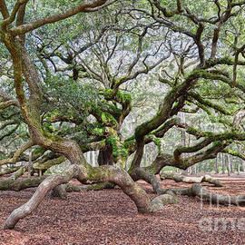 Under Angel Oak by Catherine Sherman