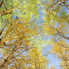 Under the Aspen Tree's by Ruth Jolly