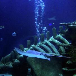 Underwater Environment - Study II by Doc Braham