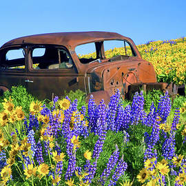 Up To My Fenders in Spring Flowers by Pauline Hall